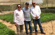 بالصور...وفد من وزارة الزراعة يتفقد مزارع شتلات الفراولة في القليوبية
