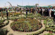 العراق: مشروع زراعة مليون شتلة لمواجهة آثار المناخ وإرتفاع درجة الحرارة