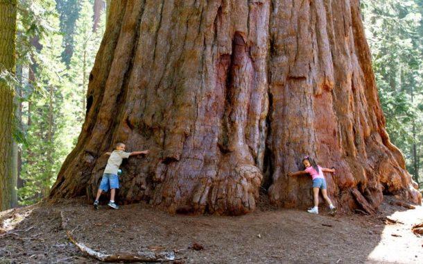 تعرف علي أقدم شجرة في العالم.... وأضخم أشجار كوكب الأرض