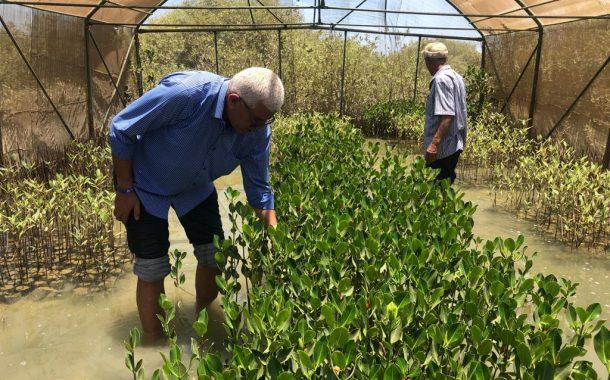 بالصور...نقيب الزراعيين: التوسع في زراعة أشجار القندل لحماية شواطئ البحر الاحمر وخليج العقبة من مخاطر تغير المناخ