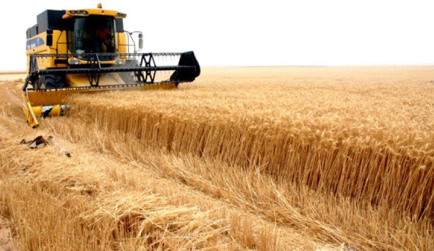 الحرب في سوريا تحولها من الاكتفاء الذاتي من القمح إلي الاستيراد