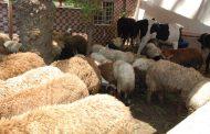 حقيقة حملات وزارة الزراعة علي شوادر بيع الأضاحي (تفاصيل)