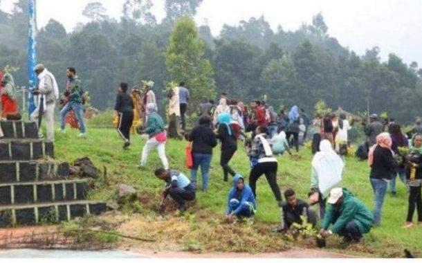 التصحر في أثيوبيا يدفع الحكومة لزراعة 224 مليون شجرة في يوم واحد