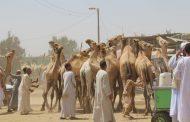 الزراعة ترد علي أزمة تعذيب جمال سوق برقاش (صور)