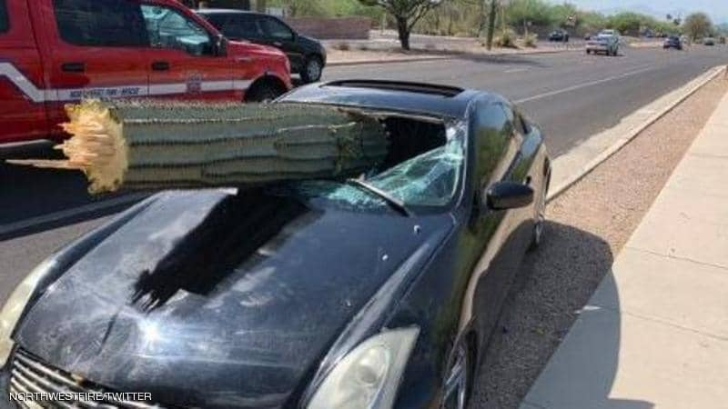 نجاة سائق من الموت بسبب سقوط شجرة الصبار علي سيارته