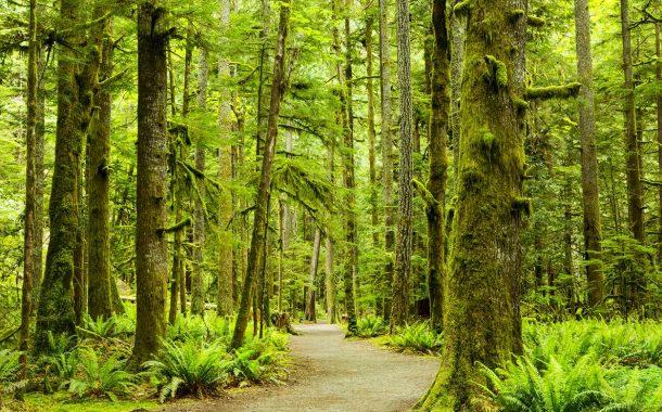 الزراعة:التشجير وزراعة الغابات في ورشة عمل البساتين