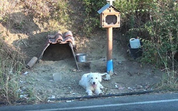 بالفيديو... كلب يجلس بجوار موقع مصرع صاحبه لمدة عام ونصف (مشاهد الحزن)