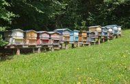 لمواجهة تأثير البرد علي النحل...10 توصيات لحماية الخلايا