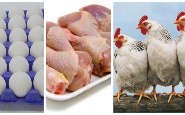 أسعار الدواجن ومنتجاتها اليوم الأربعاء (تفاصيل أسعار البيض واللحوم البيضاء والبط)
