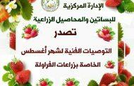 الزراعة تعلن التوصيات الفنية لزراعة الفراولة (أغسطس)