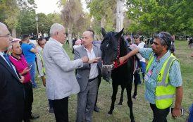 عجائب الحرب في سوريا: 9 الآف حصان عربي أصيل بالداخل وخيولا