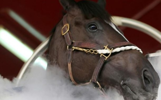 لاول مرة في العالم: دبي تستخدم تكنولوجيا التبريد لعلاج الخيول