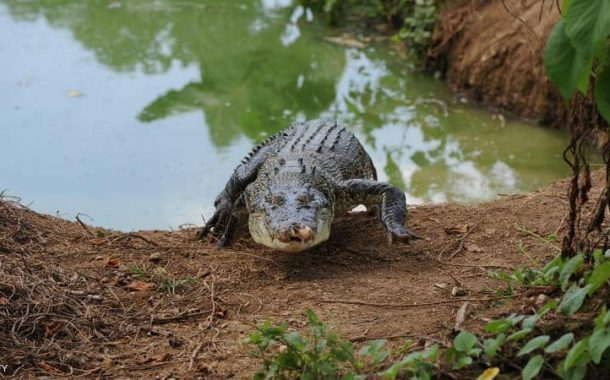 بيئة... تمساح يقتل فلبيني والسبب غريب (تفاصيل)