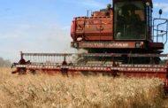 تراجع إنتاج الحبوب في المغرب بنسبة 49 % والإنتاج الكلي: 52 مليون قنطار