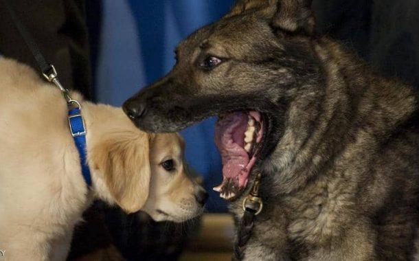 أحدث دراسة علمية: 11 نصيحة تحميك وأطفالك من عضة كلب