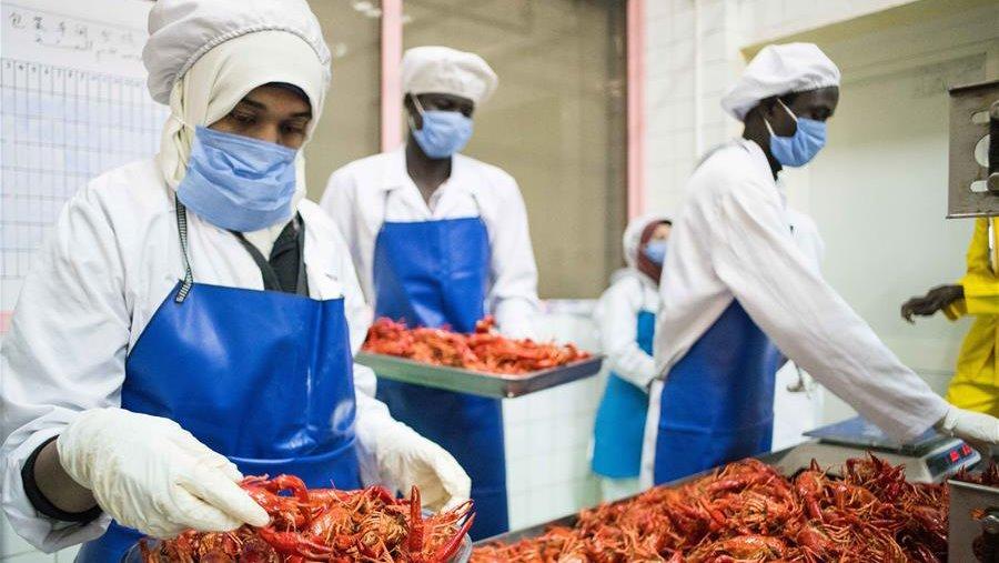 المصانع الصينية تحول إستكاوزا النيل إلي مشروع إقتصادي عملاق
