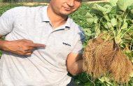 عماد مهدي يكتب: خطة مواجهة تحديات إنتاج وتصدير الفراولة