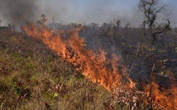 حرائق غابات الامازون تمتد إلي بوليفيا...والخسائر 10 ملايين فدان و2.3 مليون حيوان