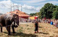 الدانمارك تتجه لحظر إستخدام الحيوانات البرية في السيرك و4 فيلة تستفيد من القرار