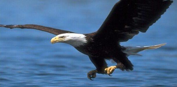 محمية جبل علبة...أقدم نسور العالم وحياة تتنوع فيها الطيور والحيوانات البرية