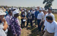 بالصور... أعضاء مركز الأرز الإفريقي يتفقدون حقول الأرز الارشادية بمحطة بحوث سخا بكفر الشيخ