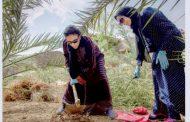 السعودية تطلق مشروع دولي بحثي لحماية نخيل العالم