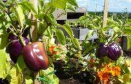 د مايسة لطفي تكتب: الزراعة العضوية هي طوق النجاة للمستقبل