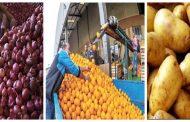 الزراعة:الصادرات ترتفع إلي 5.4 مليون طن والموالح والبطاطس والبصل تحافظ علي المراكز الاولي