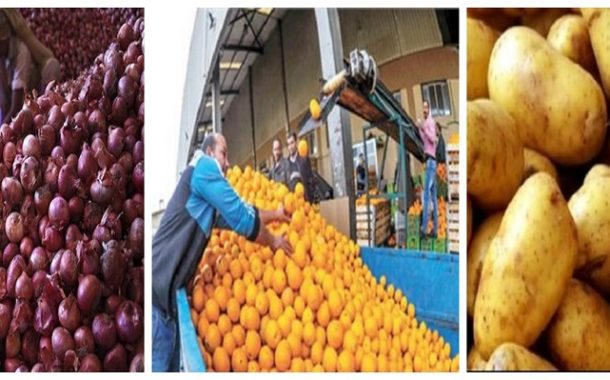 الصادرات الزراعية تقفز إلي 4 ملايين و795 ألفا طن والموالح والبطاطس والبصل تسجل 52% من الصادرات