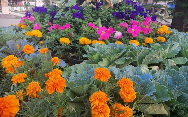 بالصور... أحدث صيحات معرض زهور الخريف:  موضة