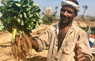 الموافقة عليتصدير 47 ألف شتلة فراولة وفواكه وتقاوي بطاطس للسعودية والامارات وباكستان