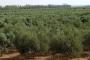 اليوم...معهد البساتين ينظم ورشة عمل حول التعظيم الاقتصادي لزراعة الزيتون في مصر