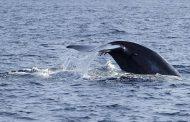 وزارة البيئة تحسم الجدل حول حقيقة أصوات الحيتان في الساحل الشمالي