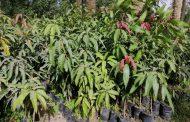 عاجل الزراعة توافق علي تصدير 276 ألف شتلة فواكه منها 200 ألف شتلة فراولة لأثيوبيا