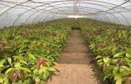 الزراعة: تصدير 26 ألفا و750 شتلة مانجو وموالح وخوخ للسعودية والامارات