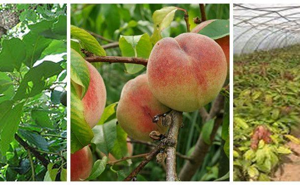 الزراعة: الموافقة علي تصدير 11 ألفاو 750 شتلة تين وموز ومشمش وكمثري وتفاح للسعودية والبحرين