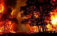 حرائق الغابات الإسترالية تدمر 10 ملايين فدانا والسبب المناخ