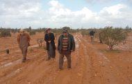 بحوث الصحراء: حصر 225 مزرعة زيتون تتطبق برنامج الممارسات الزراعية الجيدة بمطروح