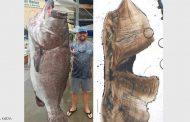 سمكة عجوزة.... عمرها 50 عاما ووزنها 150 كيلو جرام