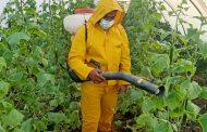 بالصور... الزراعة تعلن تفاصيل تدريب مطبقي المبيدات علي الإستخدام الآمن في المحاصيل الزراعية