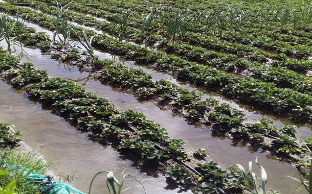 محمود عطا يقدم 3 نصائح لحماية المحاصيل البستانية بعد الامطار (تفاصيل)
