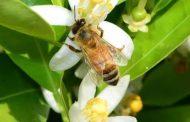 محمد هجرس يكتب: الجودة والمبيدات والعسل ...براءة النحل بأمر العلم