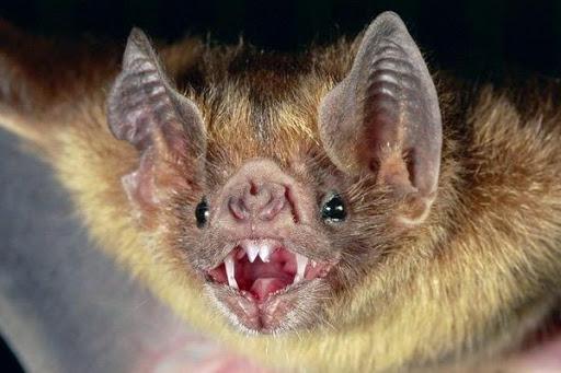 الزراعة تصدر أخطر تقرير عن الخفاش:  مصاص دماء ويلتهم 1000 حشرة في الليلة
