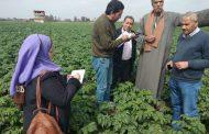 تفاصيل زيارة أول لجنة للمرور علي زراعات البطاطس بالقليوبية بعد موجة الأمطار