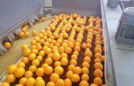 عاجل... تفاصيل فتح أسواق اوزبكستان أمام صادرات مصر من الموالح