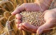 تفاصيل أخطر تقرير للمنظمة العربية للتنمية الزراعية حول تأثير كورونا علي الأمن الغذائي