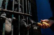 ماذا تأكل حيوانات حديقة الحيوان بالجيزة مع إرتفاع درجات الحرارة؟