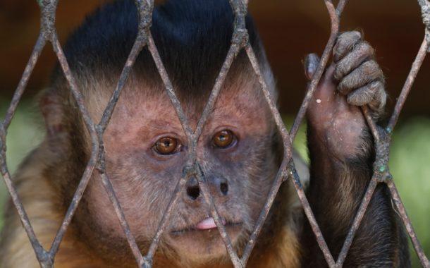 بالصور...يوم الحزن مع أول إغلاق لحديقة الحيوان في شم النسيم