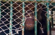 حيوانات تنتظر إلغاء قرار إغلاق حديقة الحيوان وآخري تزغرد طربا بالهدوء
