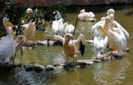 إجراءات مشددة لحماية حديقة الحيوان من موجة الحر الشديد حتي الجمعة المقبل